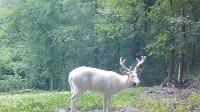 /nature/crazy-and-hilarious-wildlife-photos-captured-on-trail-cams/img/wild1-700x394MobileImageSizeReigNN.jpg